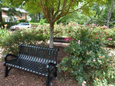 Dare Steele Memorial Garden